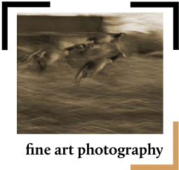 Fine Art Photography Button